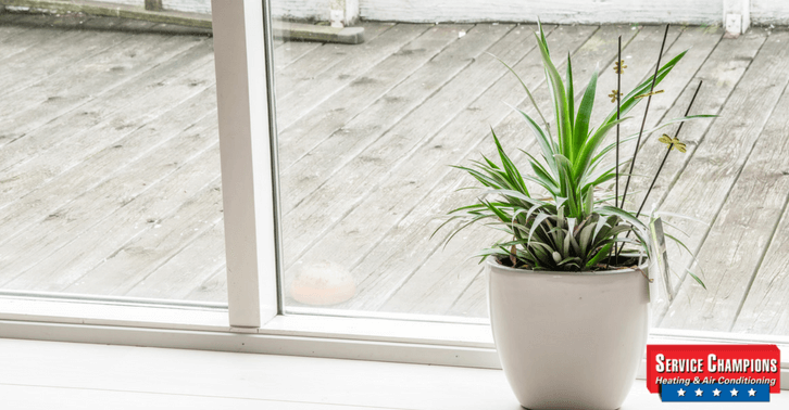 The 5 Best Houseplants for a Greener and Cleaner Home