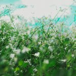 How to Control Summer Allergies   Summer Allergy Dos and Don'ts