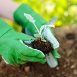 Eco-Friendly Tips for Green Home Living